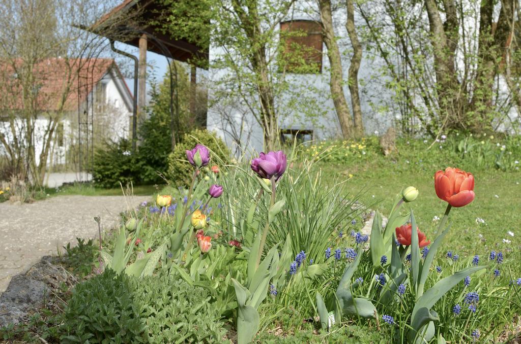 Blumenbeet-tulpen