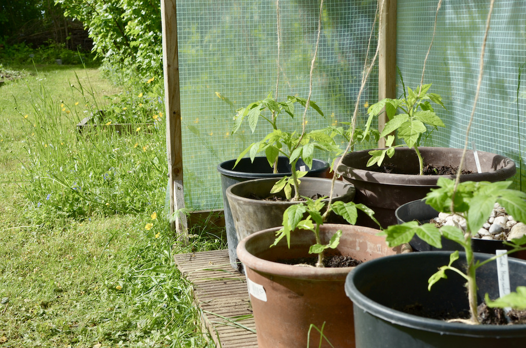 tomatenhaus_selber_bauen