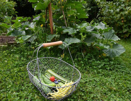 gemuesegarten-gemuesegarten_juli